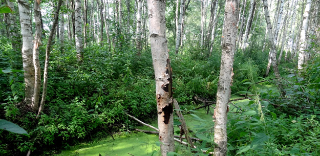Пойменные леса вдоль р. Дубны. Фото Ж.Кузьминой