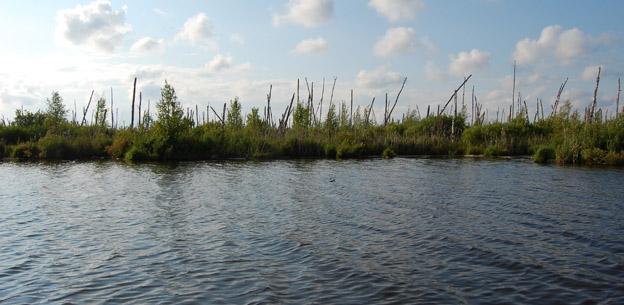 Местообитание белой лазоревки. Ольховские разливы. Фото О.Гринченко