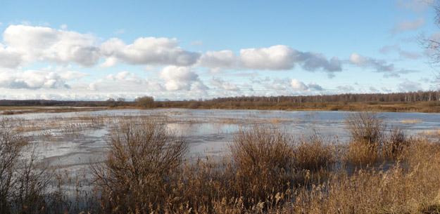Осенний паводок, окрестности д. Окаёмово, Московская область.