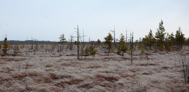 Утренние заморозки на болоте. Фото О. Гринченко