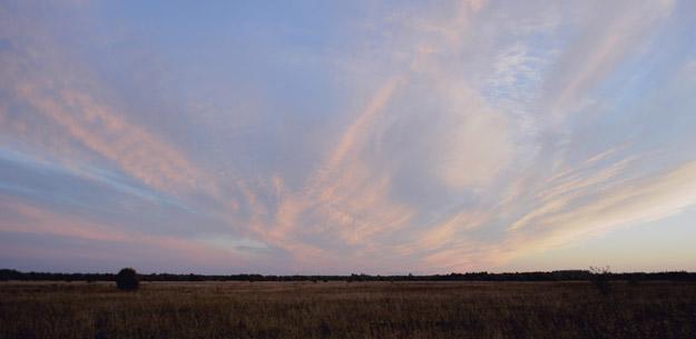 Апсарёвское болото. Фото О.Гринченко
