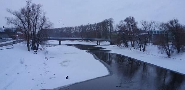 Зимующие утки на р. Эмайыги, Эстония. Фото О.С. Гринченко